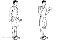 standing_dumbbell_curl