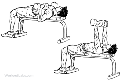 Dumbbell_Bench_Press_M_WorkoutLabs.png