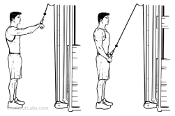 Straight_Arm_Pulldown-1.png