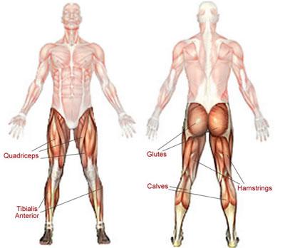 otot-kaki