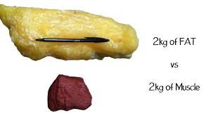 berat otot dan berat lemak
